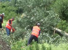 Trei trenuri au fost afectate de prabusirea copacului pe calea ferata/aradon.info