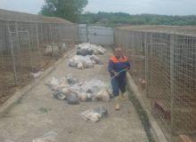 Cadavrele cainilor, invelite in saci.jpg/jurnalul.ro