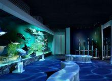Muzeul Antipa, deschis pana pe 15 iulie