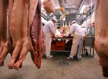 carne-porci-macelar-abator.18v5elyi2s.jpg