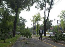 furtuna-copaci-rupti.mpaud86esy.jpg