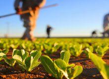 agricultura-960x600.jpg