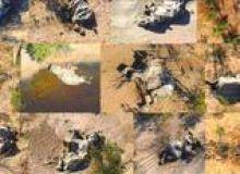 image-2020-07-2-24149007-46-elefanti-morti-delta-okavango.jpg