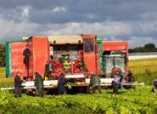 image-2020-07-20-24182439-46-lucratori-agricoli-cules-salata.jpg