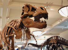 T. rex si alti dinozauri au tinut