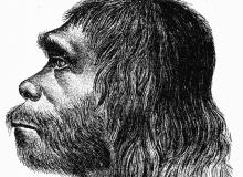 Neanderthaler.png