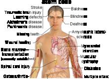 Potentialul celulelor stem.png