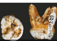 Denisovanii, inruditi cu locuitorii din Noua Guinee/ National
