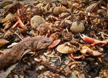 Milioane de pesti morti in Brazilia/sxc.hu