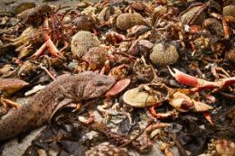 Milioane de pesti morti in Brazilia
