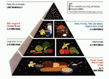 Piramida alimentara/web.mit_.edu.jpg