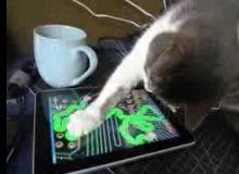 Pisica Ipad captura video