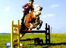 Calare pe vaca/lovendal.net.jpg