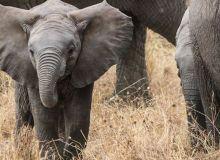 elefant-fildes-evolutie-descopera-pixabay.jpg