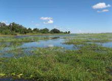 image-2019-10-28-23453061-46-zambezi-botswana.jpg