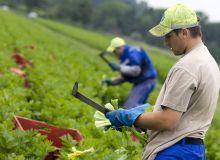 lucratori-romani-agricultura.jpg