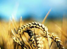cereale-grau1-ss.jpg