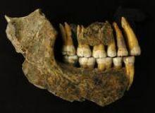 image-2021-03-9-24652740-46-mandibula-unui-neanderthal-descoperita-intr-pestera-din-belgia.jpg