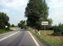 paltinis(2).jpg
