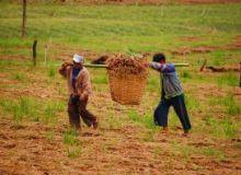 Oamenii erau obligati sa munceasca 10-12 ore pe zi, cu o pauza de 10 minute/sxc.hu.