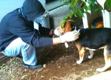 Japonezii infrunta radiatiile pentru a salva caini abandonati / globalanimal.org