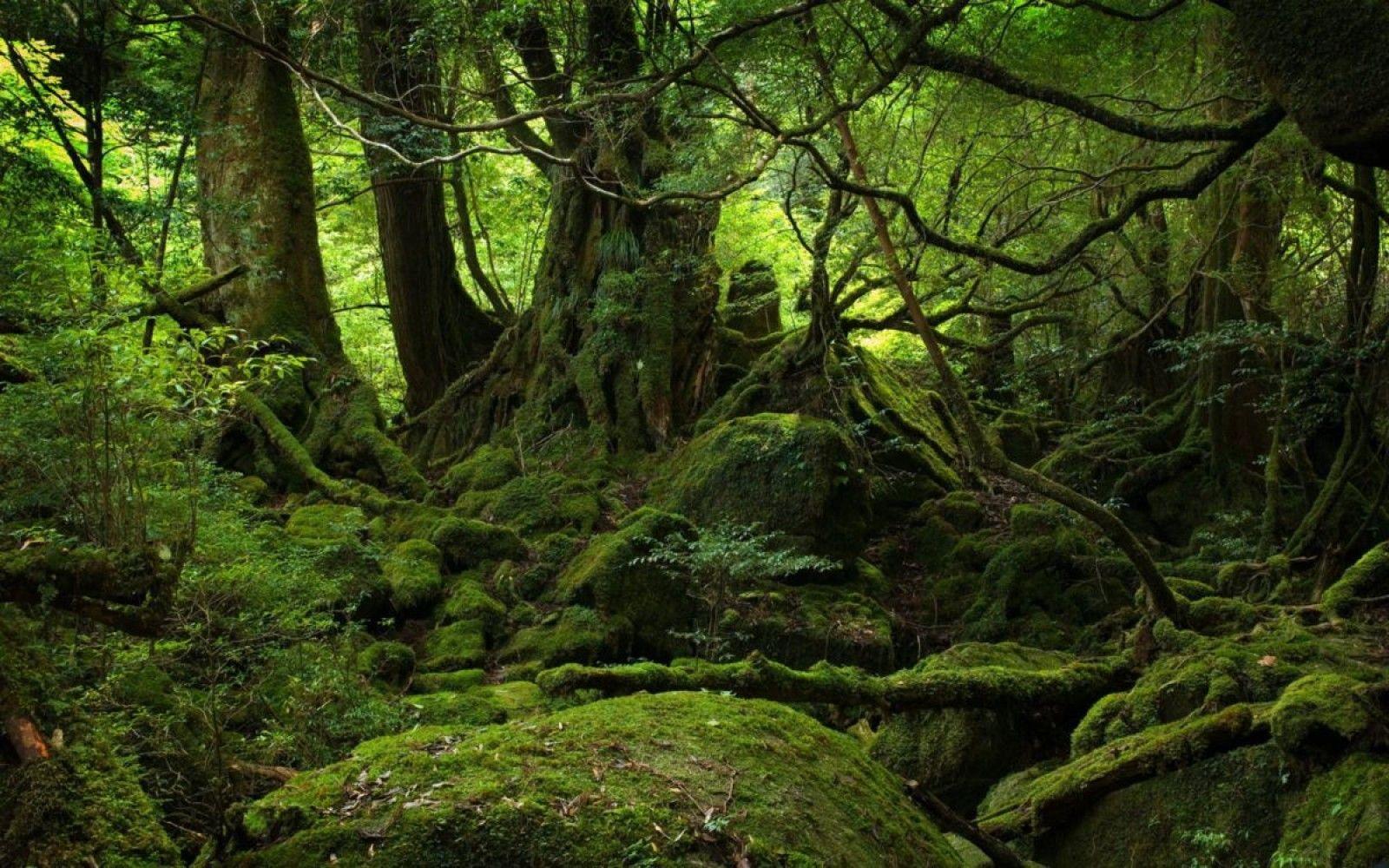 O parte din pădurile din România au fost incluse în Patrimoniul Mondial Natural al UNESCO