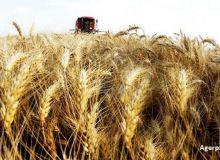 recoltele-record-de-grau-din-romania-rusia-si-ucraina-scad-pretul-la-nivel-mondial-ikar-cele-trei-tari_size9.jpg