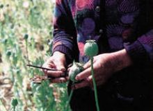 image-2010-10-1-7877369-46-opium.jpg