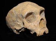 image-2019-09-13-23365647-46-craniu-neanderthal.jpg