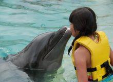 terapie-cu-delfini.jpg