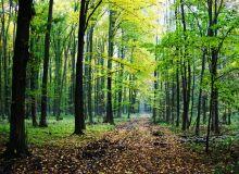 Foresttt.jpg