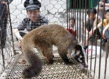 image-2021-03-18-24672415-46-zibeta-intr-ferma-animale-salbatice-din-china.jpg