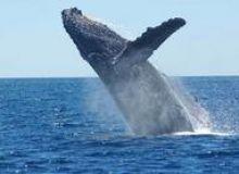 image-2018-11-21-22824393-46-balena-cocoasa.jpg