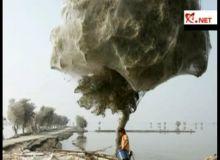 Copacii din Sindh/captura video.JPG