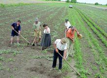 agricultura-creste-dar-ramane-una-de-subzistenta-18562101.jpg