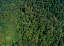 harta-padurilor-virgine-din-romania-300-000-de-hectare-identificate-18594581.jpg