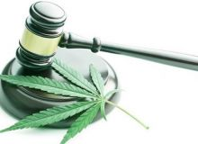 wsi-imageoptim-marijuana-research-in-the-us-judge-gavel-and-cannabis-leaf-www.endoca.com_-725x350.jpg