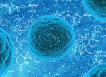 celule-stem-pixabay.jpg