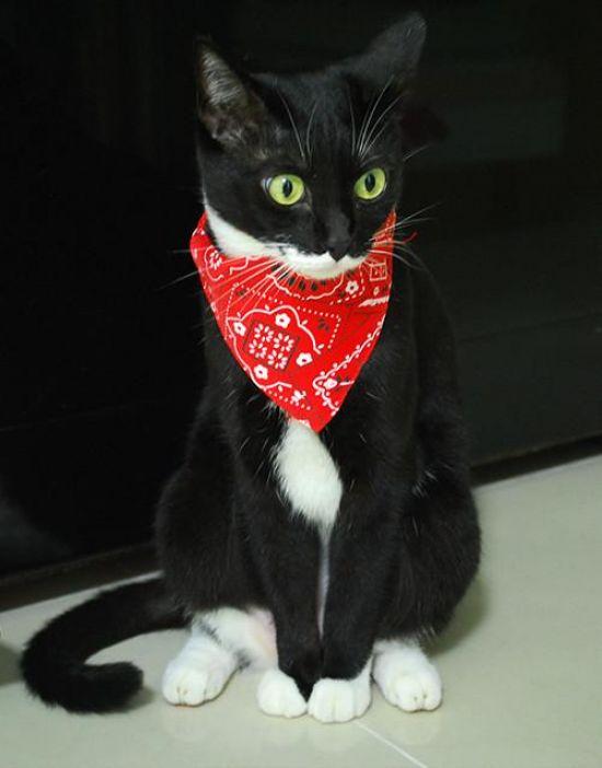 Bandit_Cat_Scarf_Bandana_Collar_1024x1024.jpg