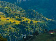 Ilustratie-paduri-copaci-munte-padure-DNA-paduri-ocrotire-ecologie-verde-nori-cer-peisaj-Q-MAGAZINE-5.jpg
