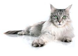 cum-sa-imbunatatesti-viata-pisicii-tale-in-doar-trei-saptamani-foto.jpg