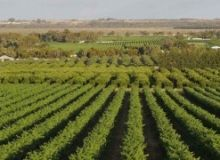 fonduri-europene-agricultura.jpg