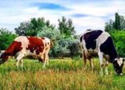 image-2020-08-27-24254430-46-cresterea-animalelor.jpg