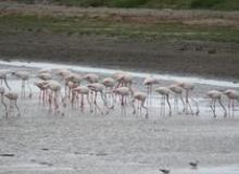 image-2021-05-27-24822098-46-flamingo-lacurile-saraturi-murighiol-tuzla.jpg