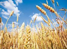 cereale-grau2.jpg